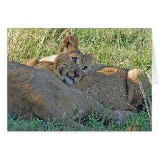 LION CUB SERIES CARDS