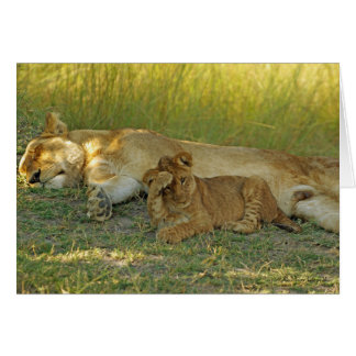 LION CUB SERIES greeting card