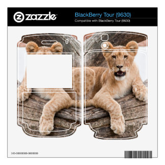 Lion cub skin for the BlackBerry