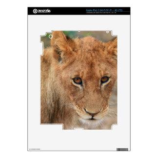 Lion Cub Skin For iPad 3