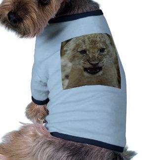 Lion cub snarling pet clothes
