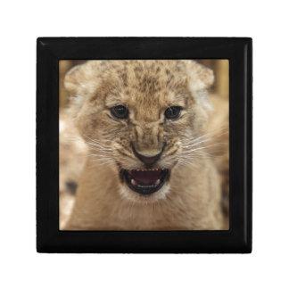 Lion cub snarling trinket boxes
