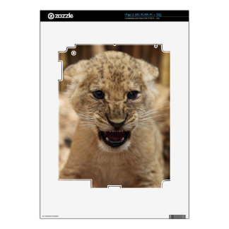Lion cub snarling skin for iPad 2