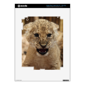 Lion cub snarling decal for iPad 3