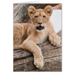 Lion cub stationery note card