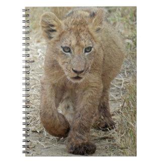 Lion Cub Walking Journal Spiral Notebook