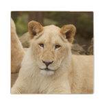 Lion Cub Wood Coaster