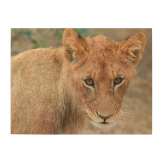 Lion Cub Wood Wall Decor