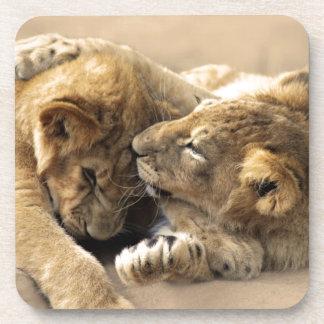 Lion cubs best friends coaster