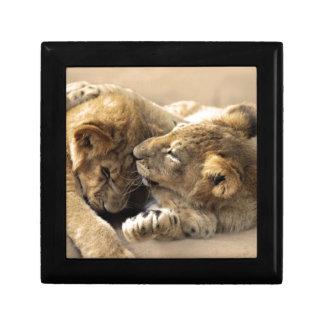 Lion cubs best friends trinket box