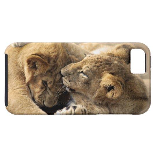 Lion cubs best friends iPhone SE/5/5s case