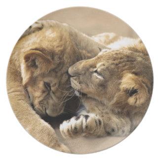 Lion cubs best friends melamine plate