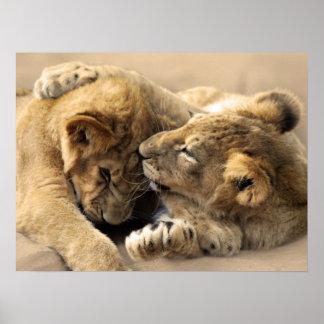 Lion cubs best friends poster