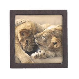 Lion cubs best friends premium trinket box