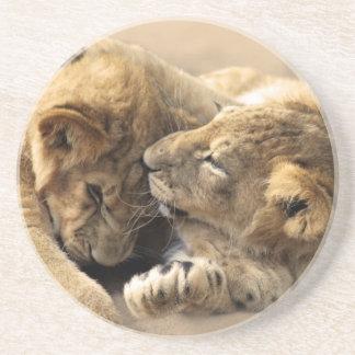 Lion cubs best friends sandstone coaster