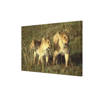 LION CUBS GALLERY WRAPPED CANVAS