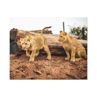 Lion Cubs Canvas Print