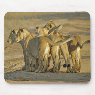 Lion Cubs Mouse Pad