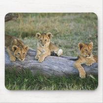 Lion cubs on log, Panthera leo, Masai Mara, 2 Mouse Pad