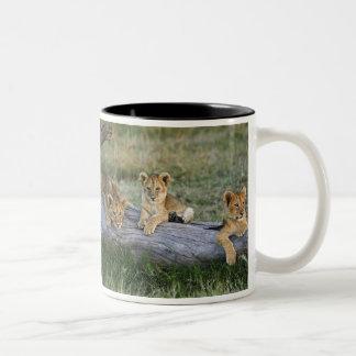 Lion cubs on log, Panthera leo, Masai Mara, 2 Two-Tone Coffee Mug