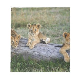 Lion cubs on log, Panthera leo, Masai Mara, 2 Notepad