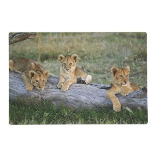 Lion cubs on log, Panthera leo, Masai Mara, 2 Placemat