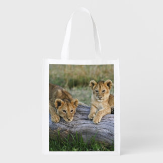 Lion cubs on log, Panthera leo, Masai Mara, 2 Reusable Grocery Bag