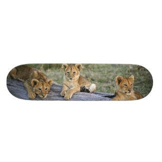 Lion cubs on log, Panthera leo, Masai Mara, 2 Skateboard Deck