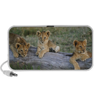 Lion cubs on log, Panthera leo, Masai Mara, 2 Travel Speaker