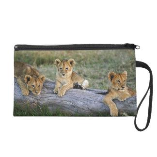 Lion cubs on log, Panthera leo, Masai Mara, 2 Wristlet