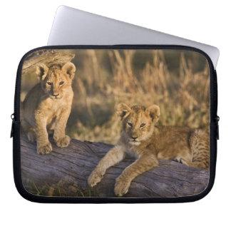 Lion cubs on log, Panthera leo, Masai Mara, 3 Computer Sleeve