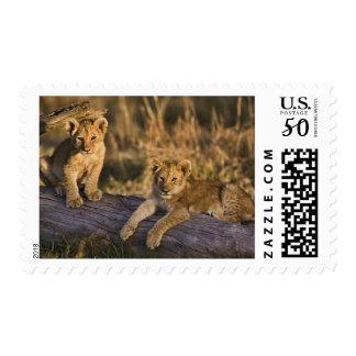 Lion cubs on log, Panthera leo, Masai Mara, 3 Postage