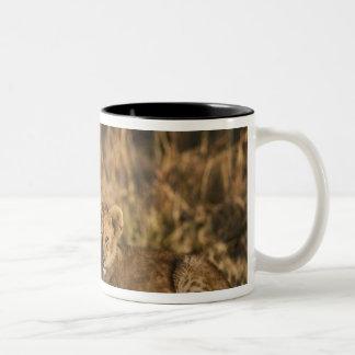 Lion cubs on log, Panthera leo, Masai Mara, 3 Two-Tone Coffee Mug