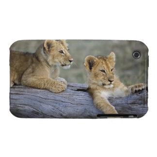 Lion cubs on log, Panthera leo, Masai Mara, iPhone 3 Case