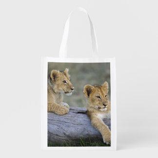 Lion cubs on log, Panthera leo, Masai Mara, Market Tote