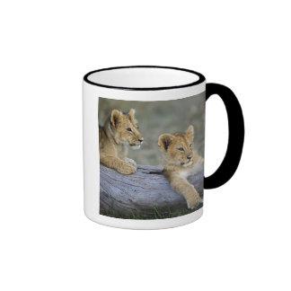 Lion cubs on log, Panthera leo, Masai Mara, Ringer Coffee Mug