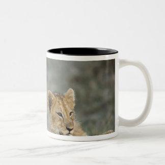 Lion cubs on log, Panthera leo, Masai Mara, Two-Tone Coffee Mug