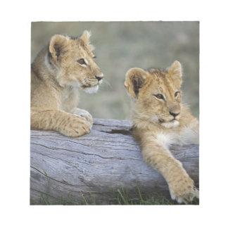 Lion cubs on log, Panthera leo, Masai Mara, Notepad