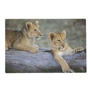 Lion cubs on log, Panthera leo, Masai Mara, Placemat