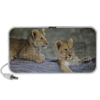 Lion cubs on log, Panthera leo, Masai Mara, iPhone Speakers