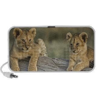 Lion cubs on log, Panthera leo, Masai Mara, Mini Speaker