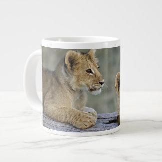 Lion cubs on log, Panthera leo, Masai Mara, 20 Oz Large Ceramic Coffee Mug