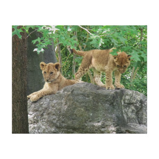 Lion cubs on the rocks stretched canvas prints