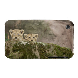 Lion Cubs Peeking Over Rock iPhone 3 Case-Mate Case