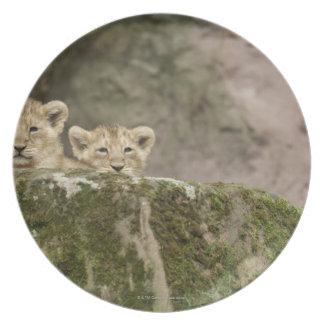 Lion Cubs Peeking Over Rock Melamine Plate