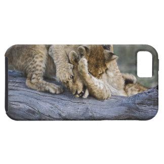 Lion cubs playing on log, Panthera leo, Masai iPhone SE/5/5s Case