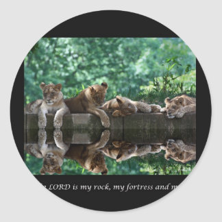 Lion cubs reflected in pool. round sticker