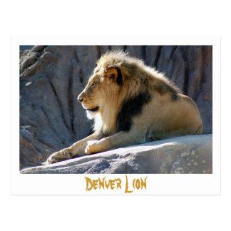 lion, Denver Lion Postcard