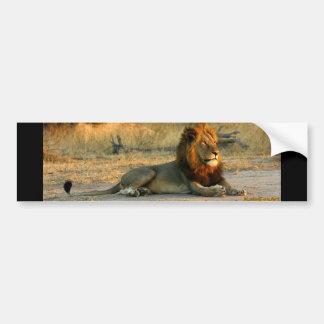 Lion Dusk Bumper Sticker