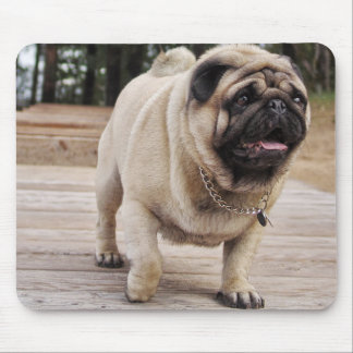 Lion Europug on the stairs mousepad